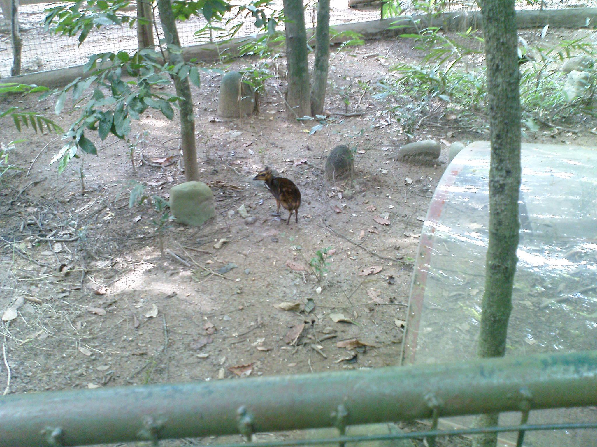09fa403561 mouse deer