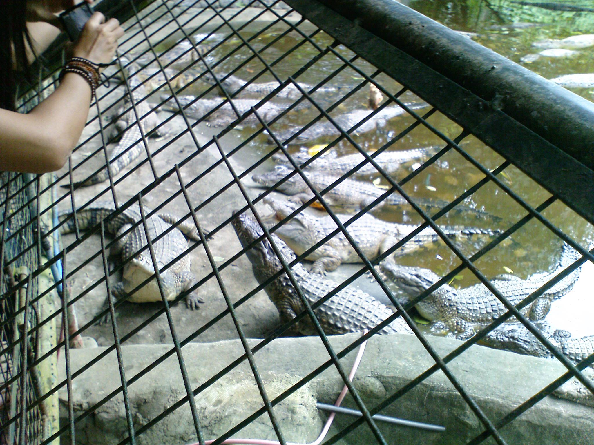 769b7031ff Feeding the Crocs
